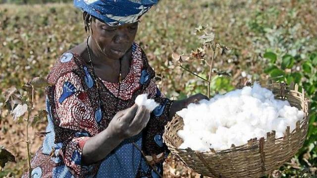 La production de coton bio au Burkina Faso en croissance de 53%